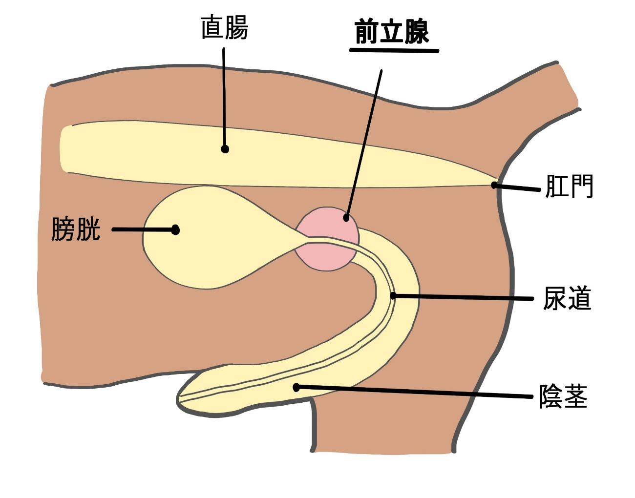 炎 痛み 前立腺